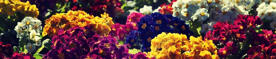 Tavaszi nyitás