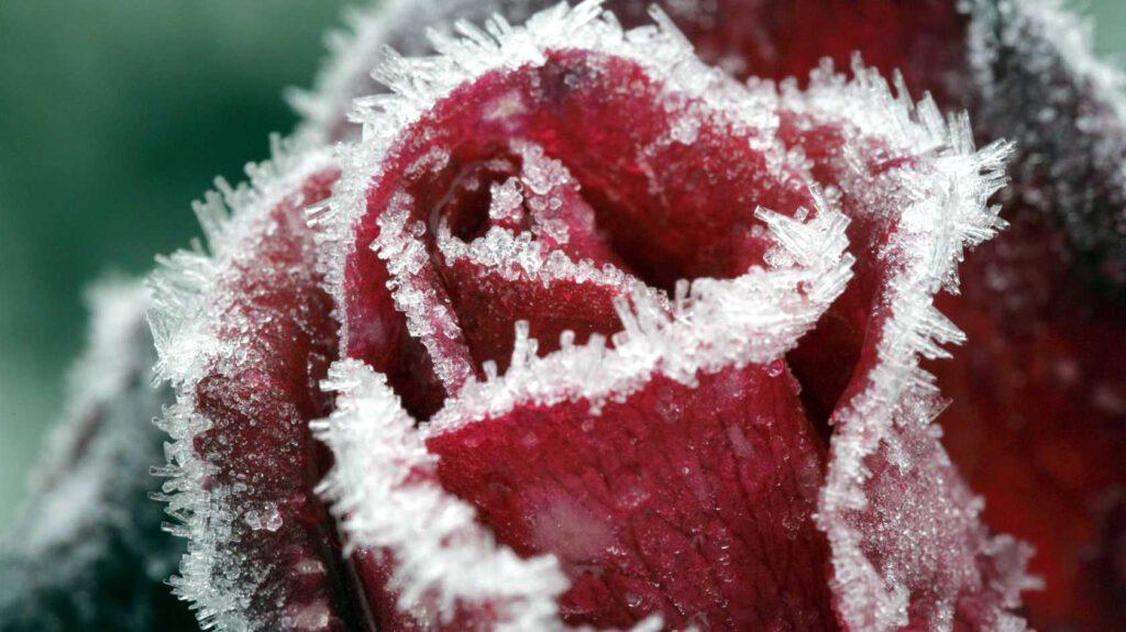 Növények is fáznak télen?